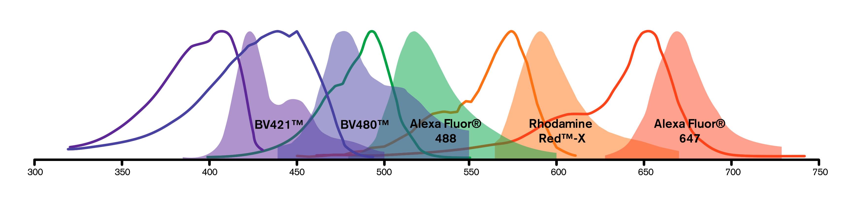 BV Dye Spectra