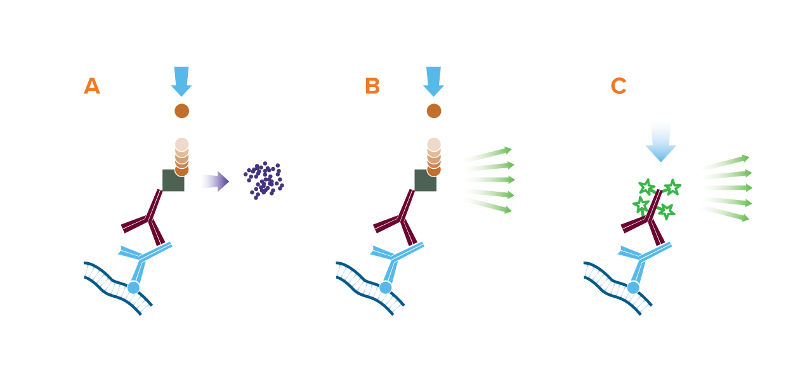 Depiction of the 3 detection methods for Western blot