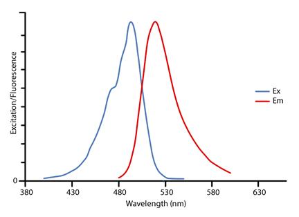 alexa fluor 488 spectra