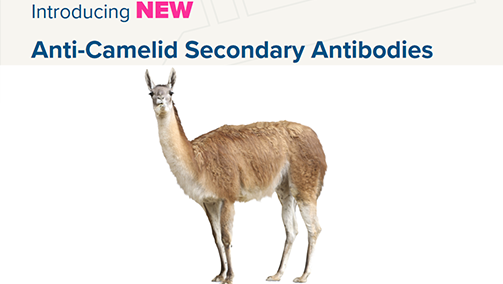 Thumbnail Preview of Anti-Camelid Secondary Antibodies