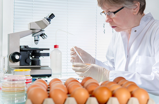Scientist using pipette, chicken eggs in view