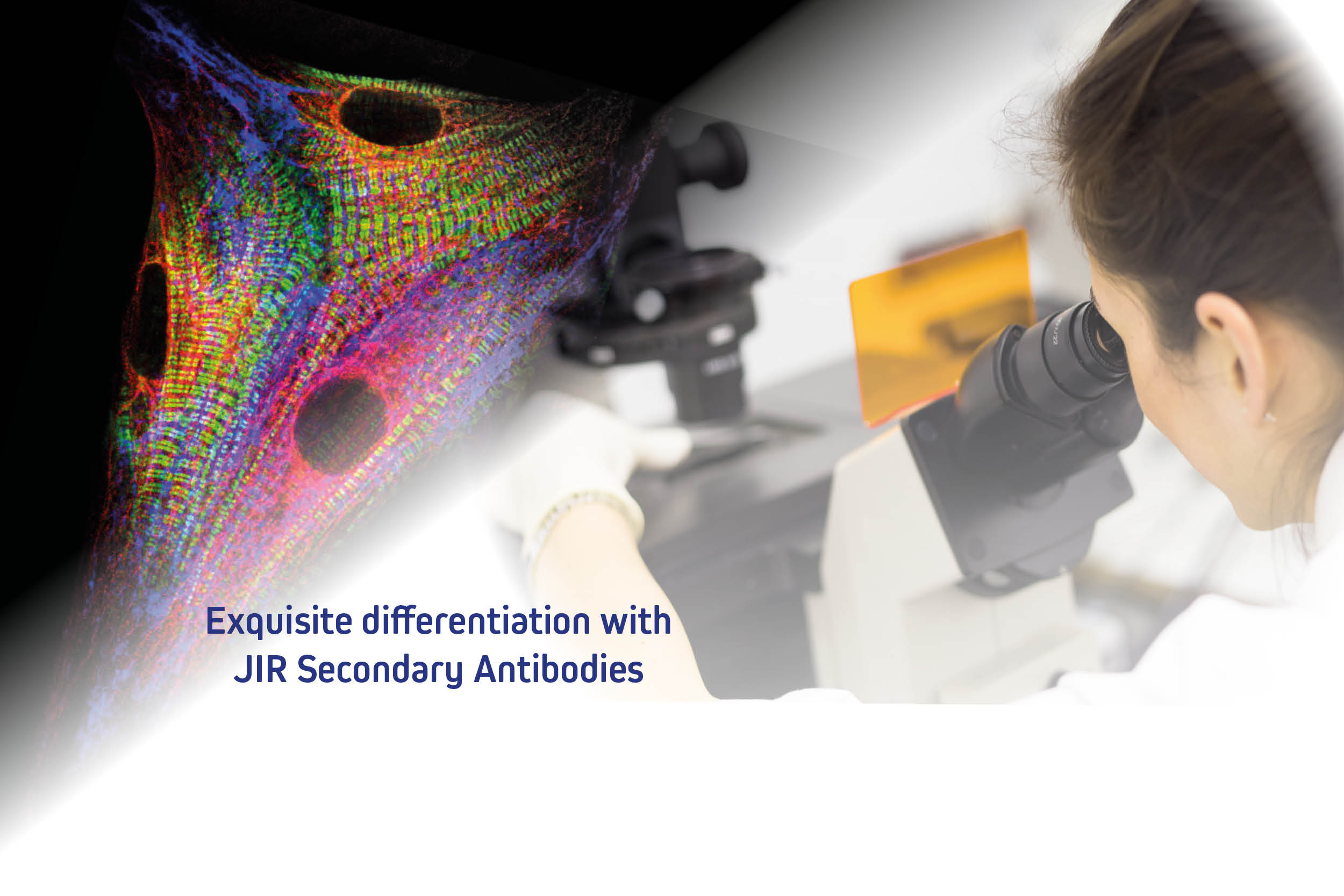 Cross-adsorbed secondary antibodies and cross- reactivity