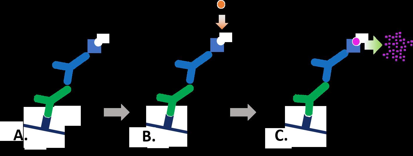Colorimetric Western blotting